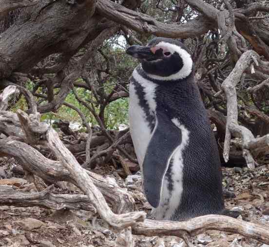 We know it just looked that way - but this penguin seemed happy to see us.