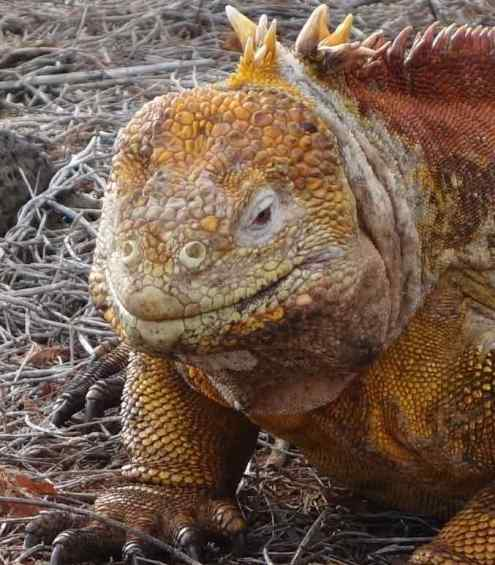 Galapagos was a good trip, but we think other great trips we've taken offered better value….