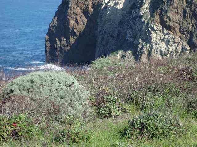 Some National Parks, like the Channel Islands in California, established in 1980, had been on our wish list for many years before we were able to visit.