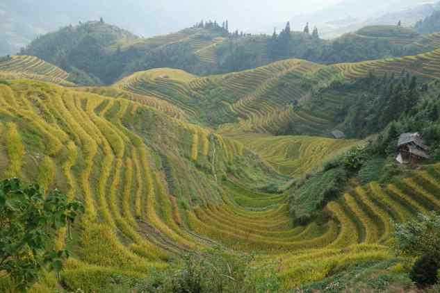 "If you want to travel, don't just stay home because ""the climate isn't right"" for crossing international borders. Now is the time to go. (Photo: rice terraces in Ping'An, China)"