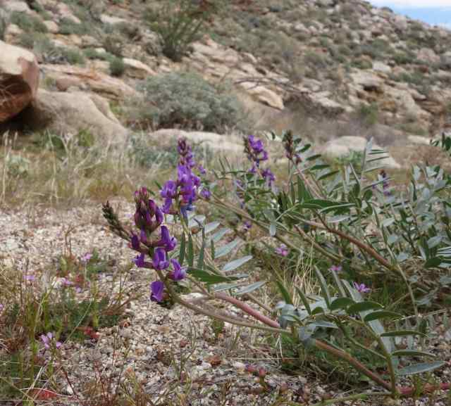 None of us knew the names of many plants we saw – including these flowers on the desert floor.